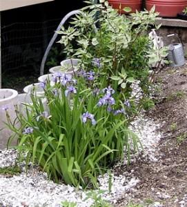Urine garden